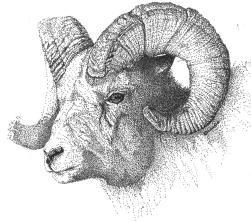 sheep-2 1