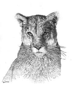 Mt Lion JPEG