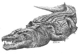 croc-2